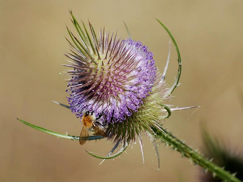 Nature et Histoire dans les Weppes