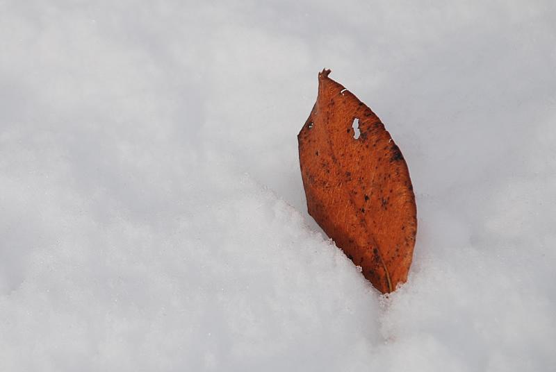 Haiku hiver 3