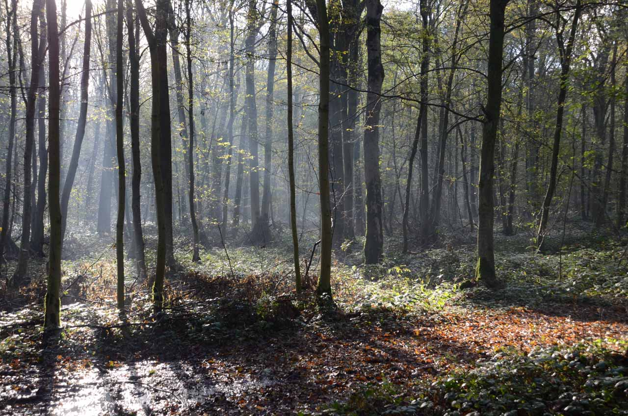 En forêt