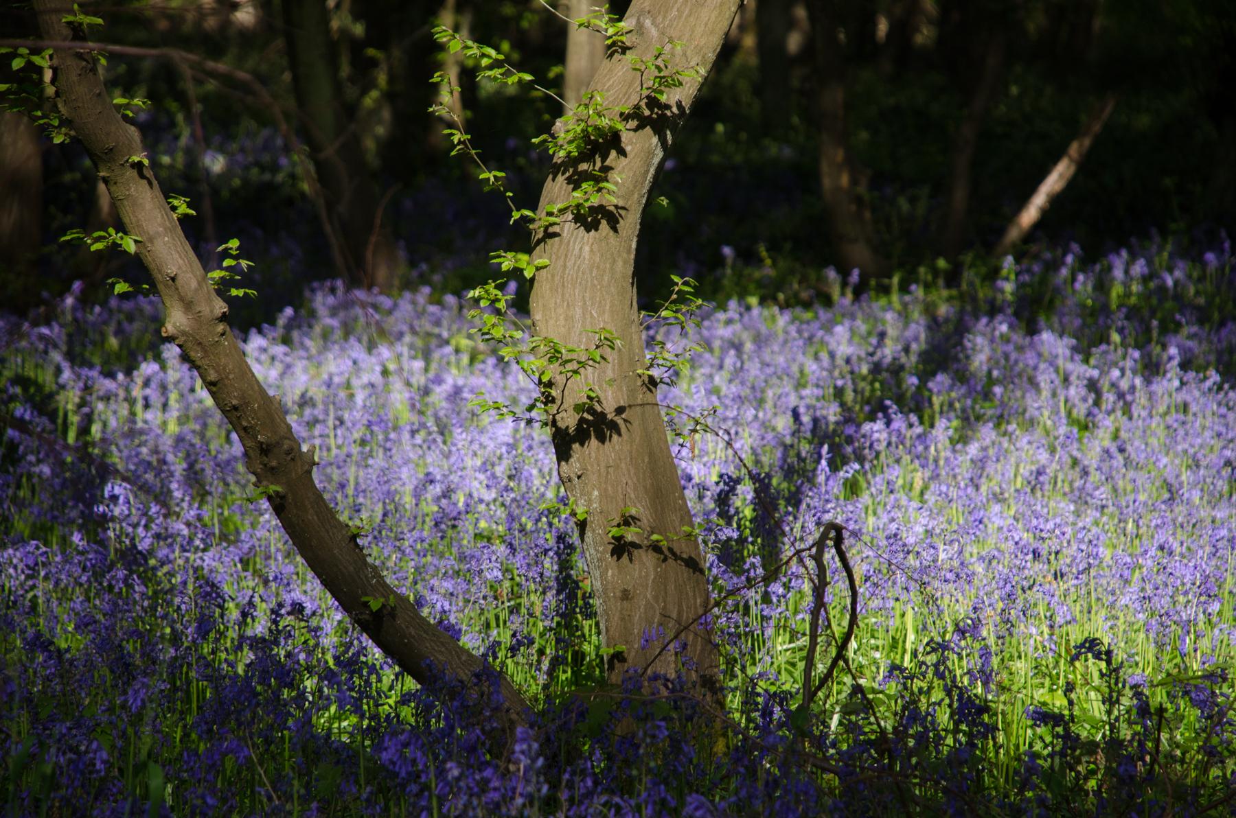 Le printemps en forêt