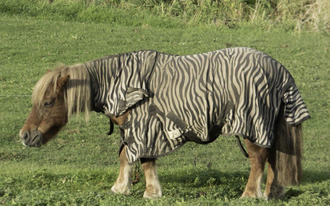 Le poney qui rêvait d'être un zèbre
