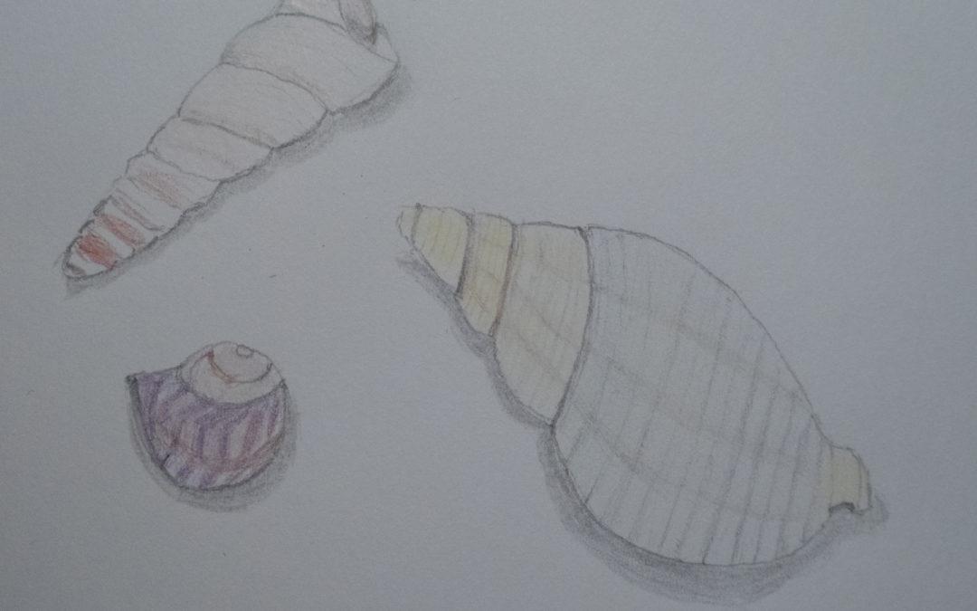 Trois petits coquillages