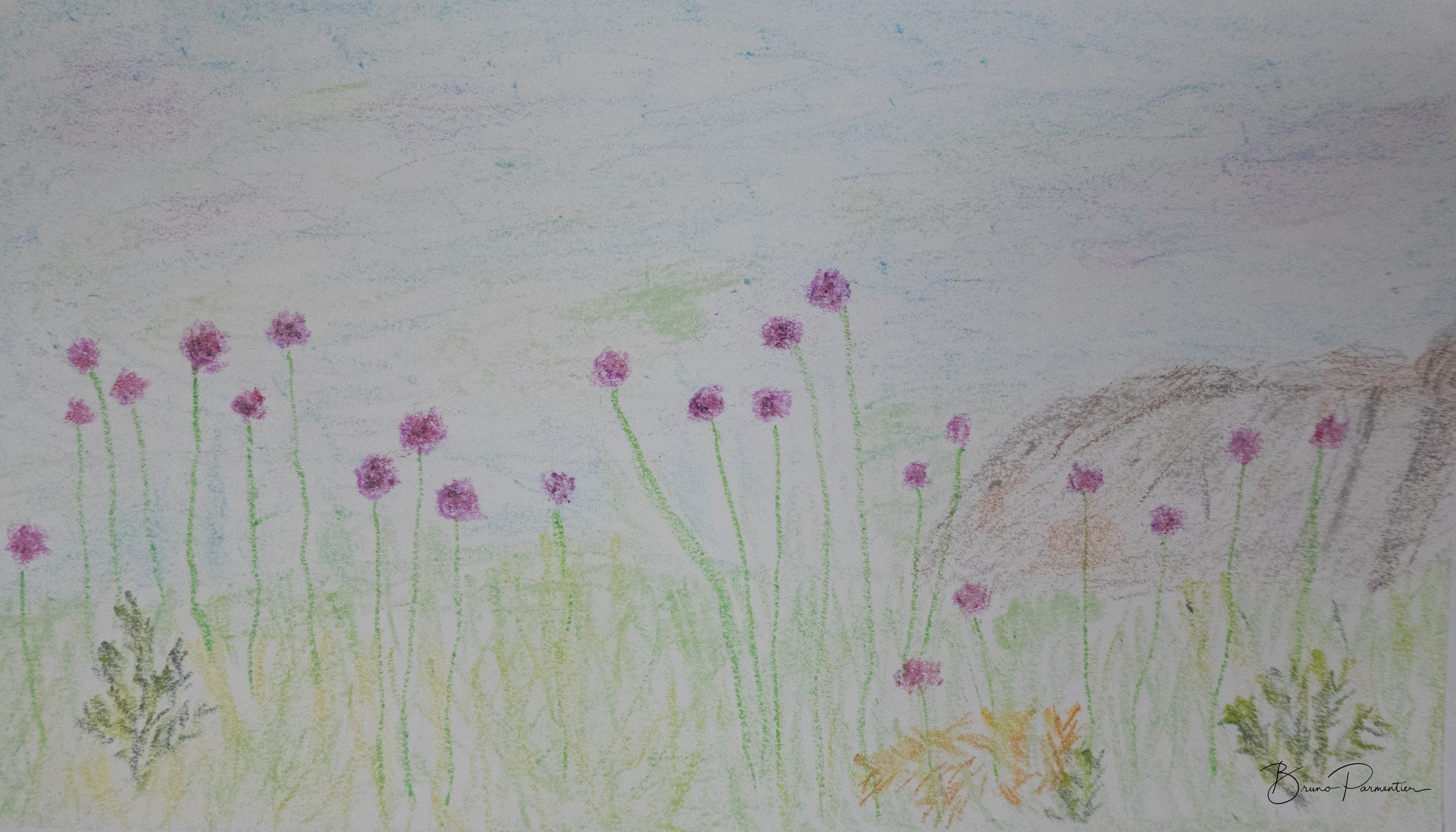 Flore des Glénan (pastel gras - 08.06.2018)