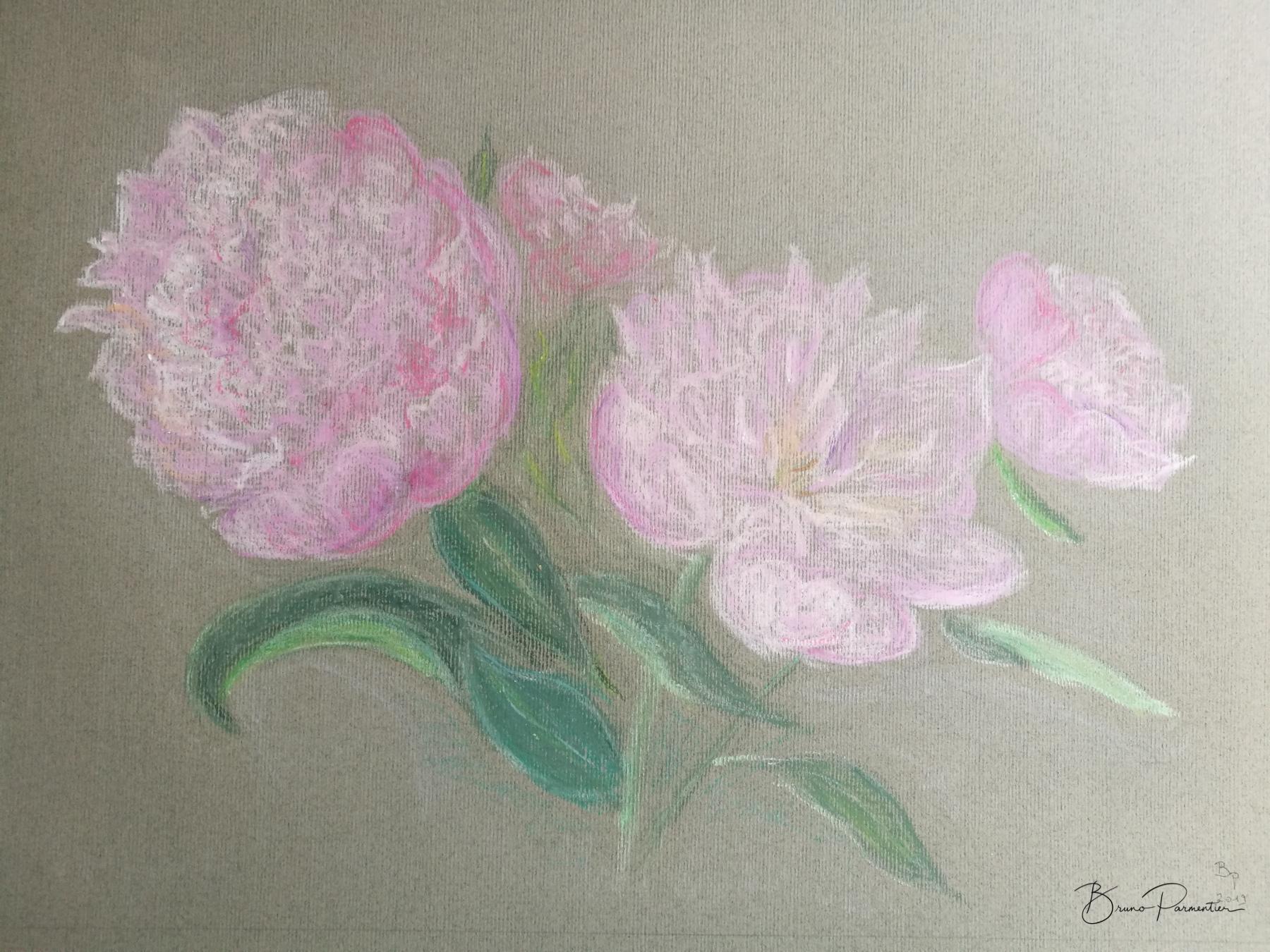 Bouquet de pivoines (pastel gras - juillet 19)